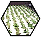 Grow hydroponic lettuce with the plans for the lettuce raft system